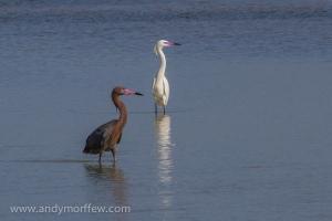 dark and light heron